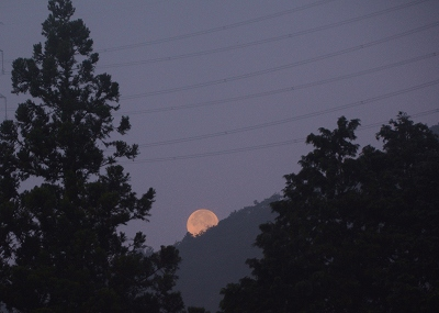 200805霧の朝 (6)