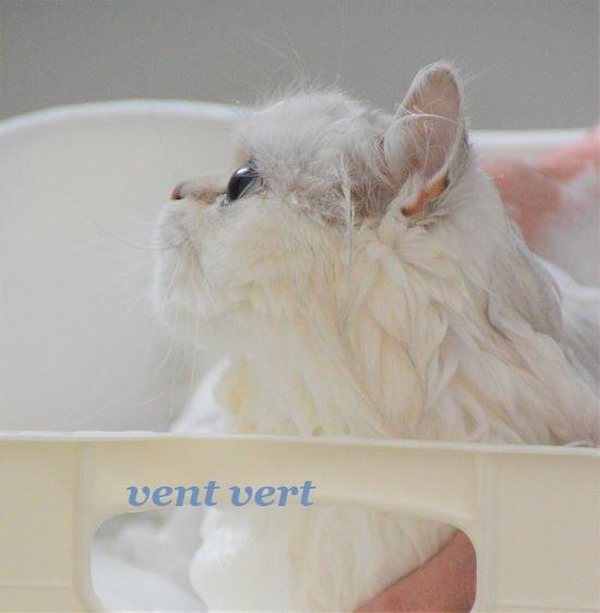 スミレ風呂4