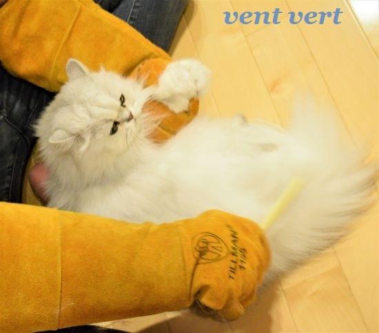 猫の夕食5