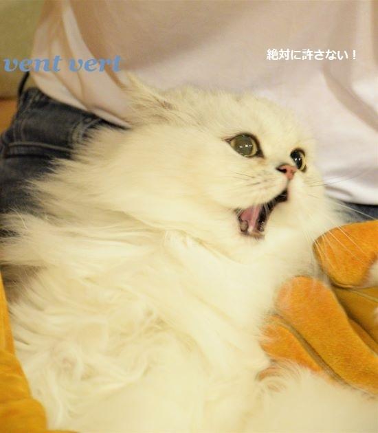 猫の夕食9