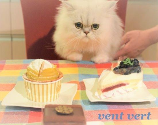 ケーキだじょ1