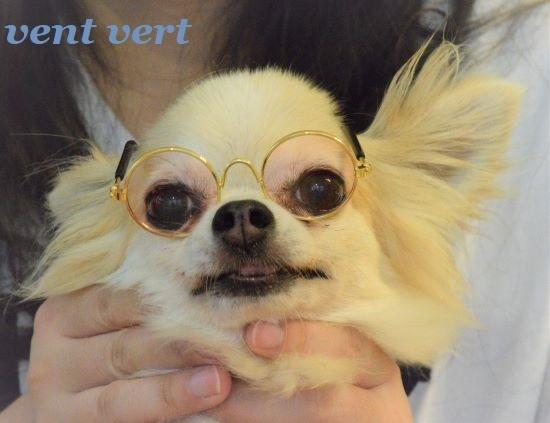メガネ犬たち3