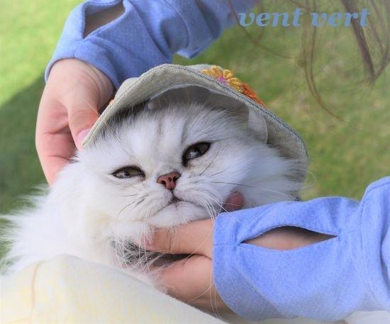帽子だよ2