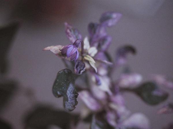 purple frash191019_2