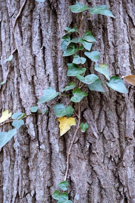autumn landview191211_5