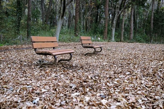 autumn landview191211_4