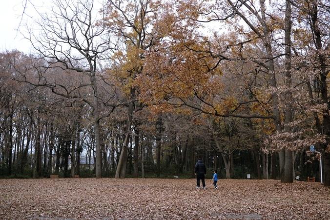 autumn landview191211_3