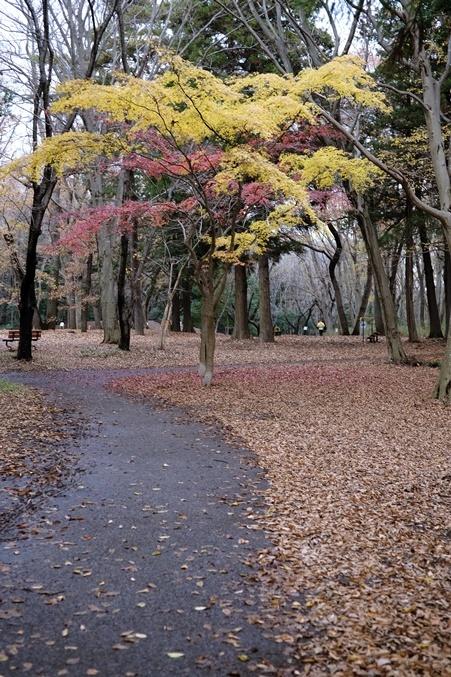 autumn landview191211_2