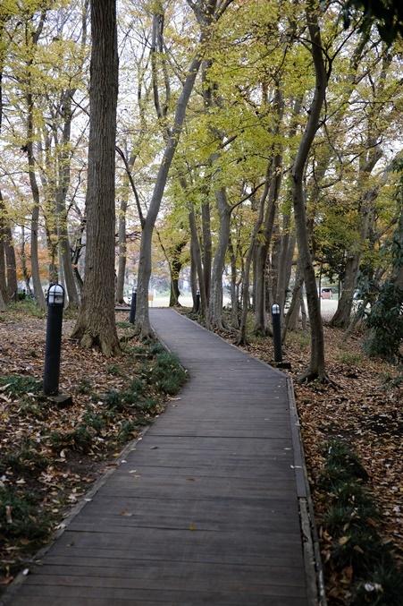 autumn landview191211_1