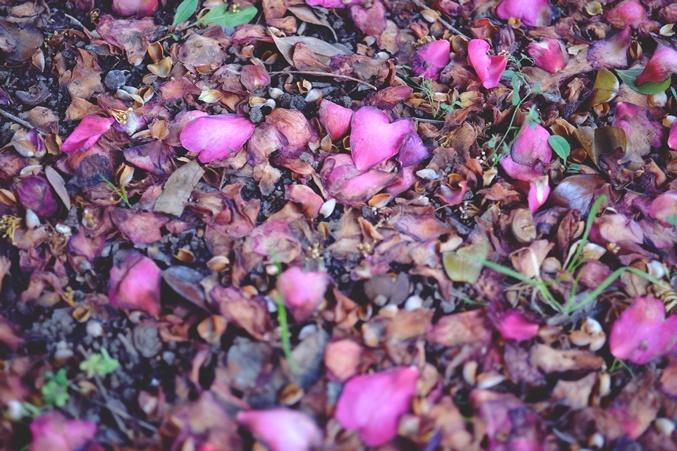 flower petal200124