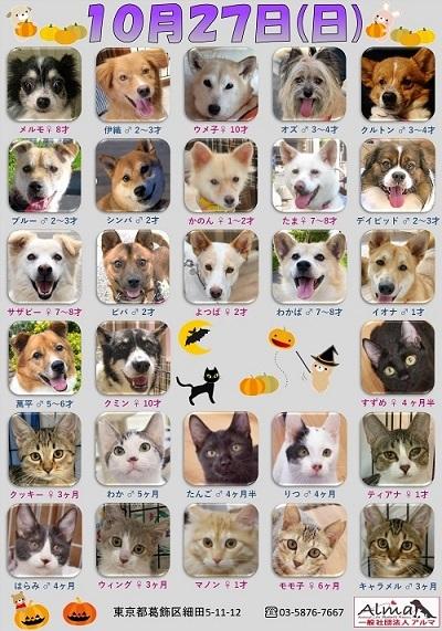 ALMA ティアハイム2019年10月27日 参加犬猫一覧