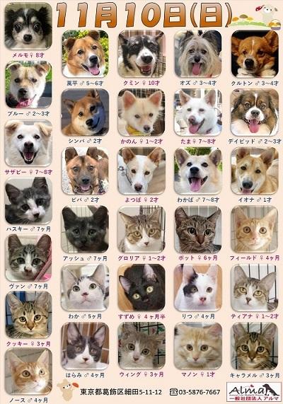 ALMA ティアハイム2019年11月10日 参加犬猫一覧