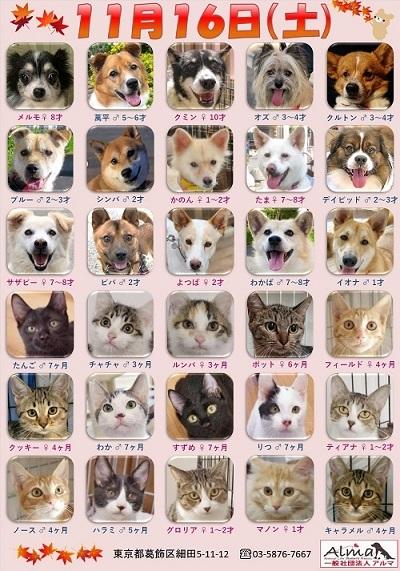 ALMA ティアハイム2019年11月16日 参加犬猫一覧