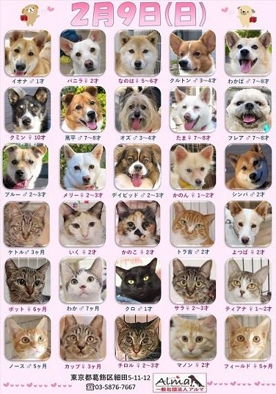 ALMA ティアハイム2020年2月9日 参加犬猫一覧 (1)