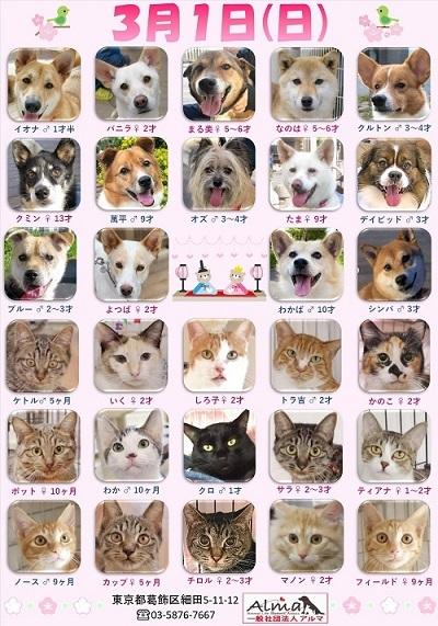 ALMA ティアハイム2020年3月1日 (修)参加犬猫一覧 (1)