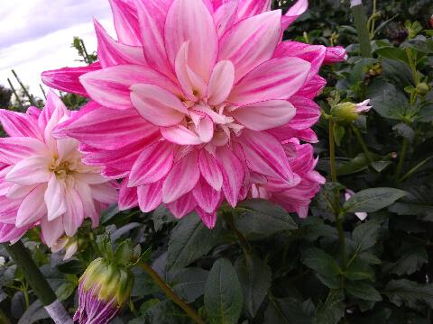2019年10月末 お花