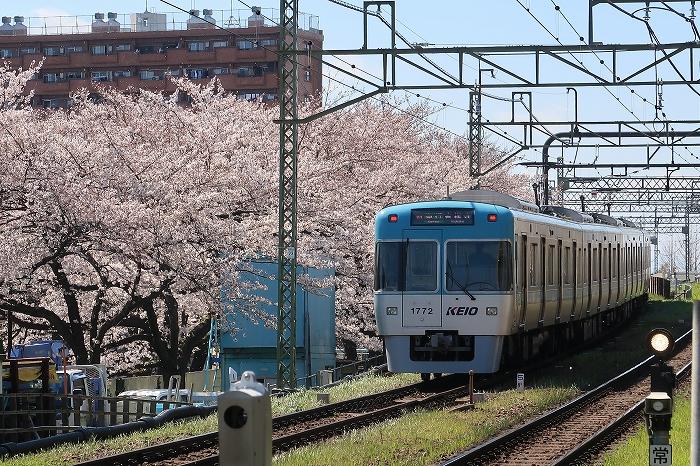 2020_04_05inokashira.jpg