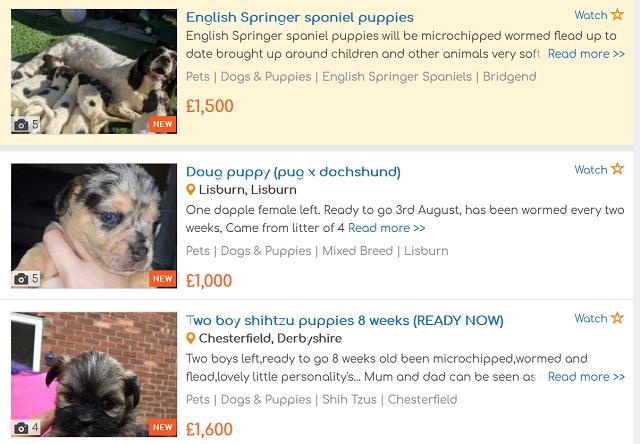 イギリス インターネット 子犬販売 20200723