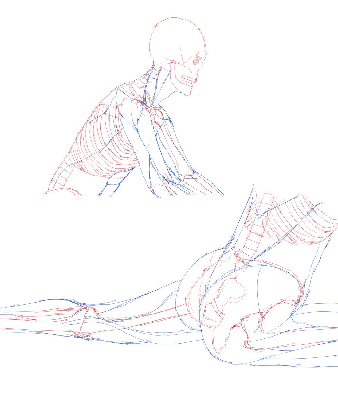 ビキニ女性の画像を下敷きにして骨格を描き入れる