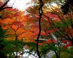 小石川後楽園02
