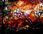 太田黒公園01