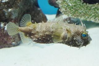 ウェブバーフィッシュ(海響)