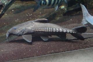 オキシドラス(池袋)