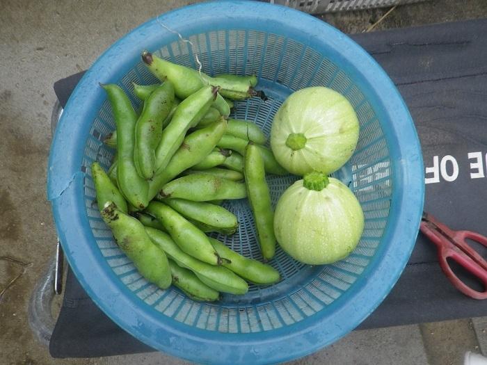 収穫2_20_05_31