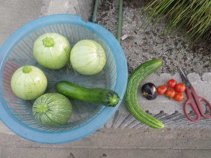 収穫1_20_06_09