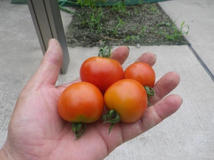 収穫3_20_07_05