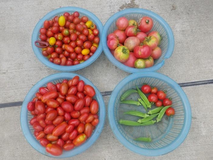 収穫2_20_07_12