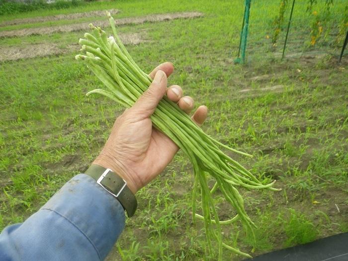 収穫4_20_07_12