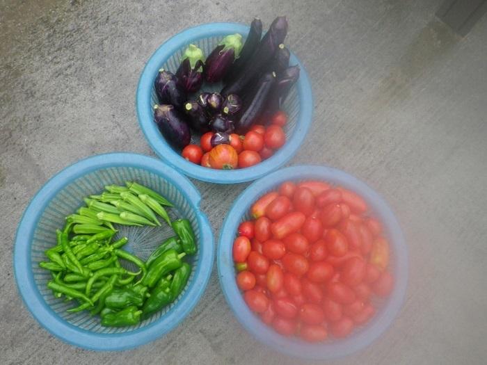収穫2_20_07_17