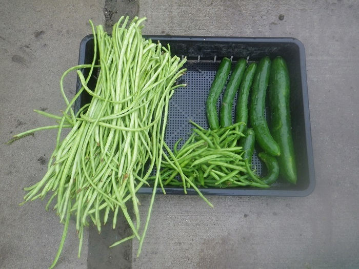 収穫3_20_07_17