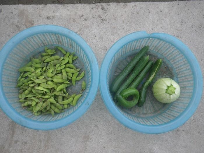 収穫20_07_18