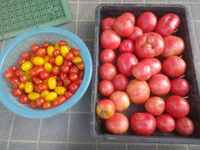 収穫1_20_07_19