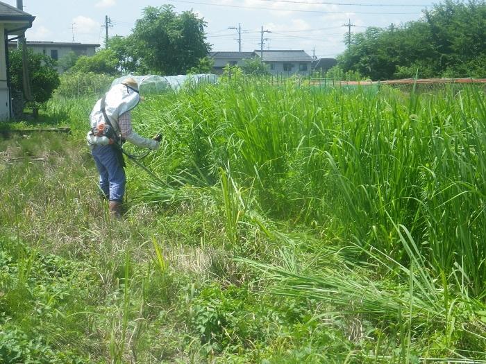 草刈り1_20_07_19