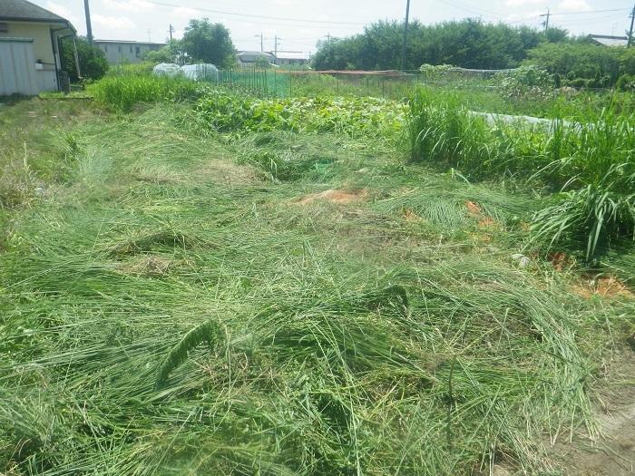 草刈り2_20_07_19