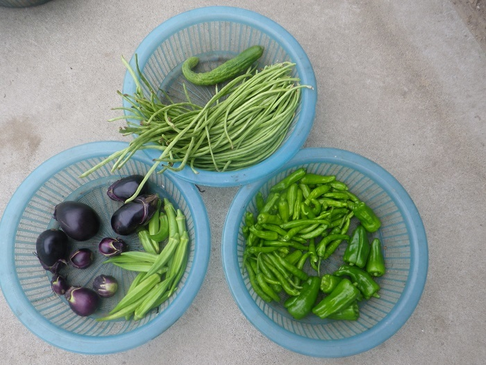 収穫1_20_07_23