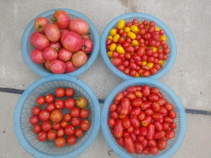 収穫2_20_07_23