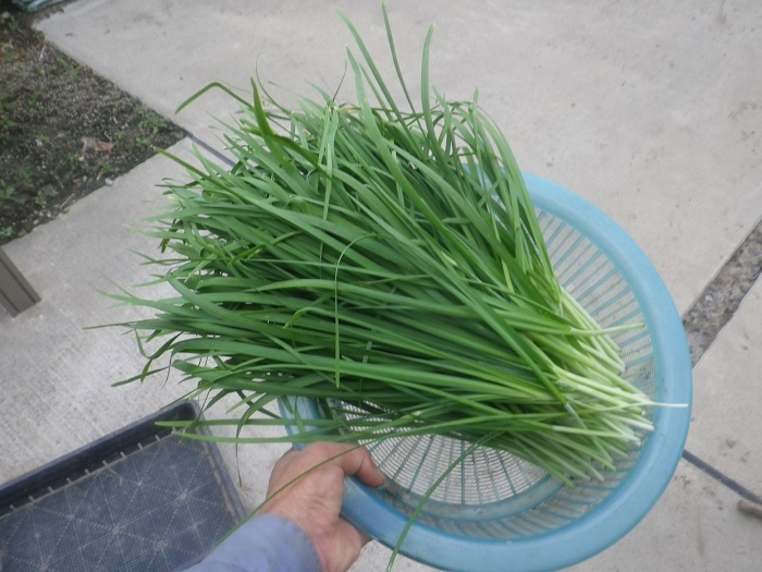 収穫3_20_07_23
