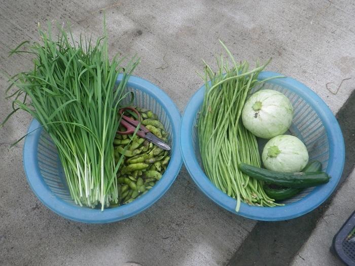 収穫1_20_07_25