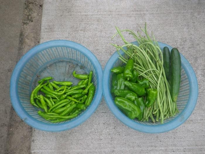 収穫1_20_07_31