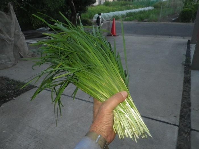 収穫3_20_07_31
