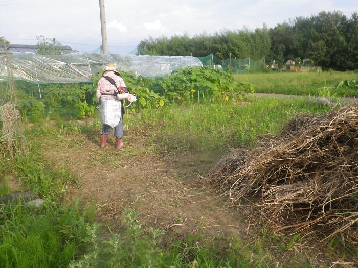 草刈り1_20_08_01