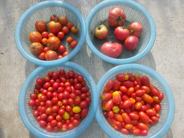 収穫2_20_08_02