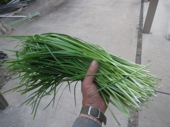 収穫5_20_08_02