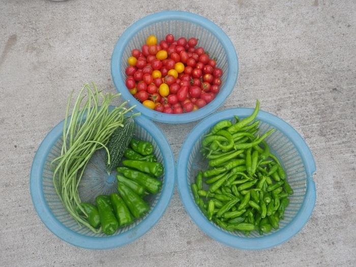 収穫1_20_08_08