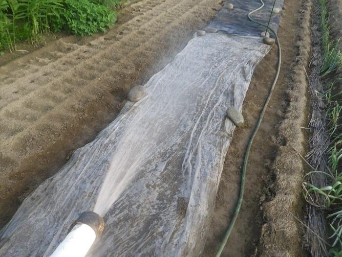 水遣り1_20_08_09
