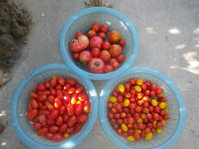 収穫2_20_08_14